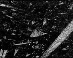 Noir Fossile